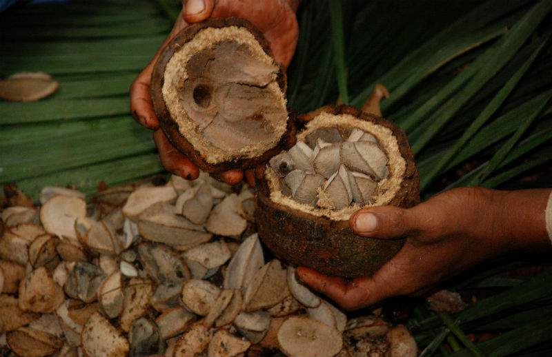 A Company Sourcing Brazil Nuts Creates both Environmental Benefits and Solid Profits